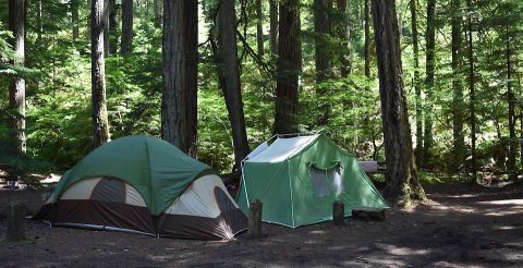 Campsites at Prentice Cooper and Franklin State Forests until further notice.