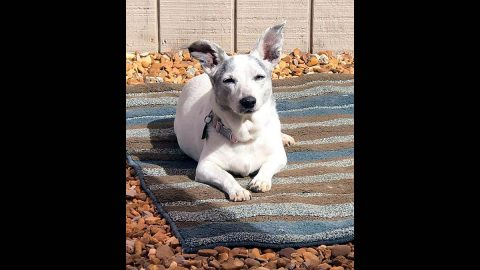 Dover Humane Society - Maggie-LuLu