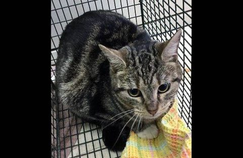 Montgomery County Animal Care and Control - Neeno