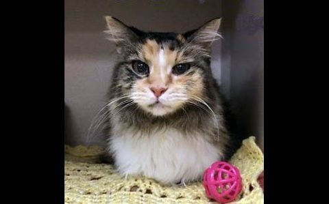 Montgomery County Animal Care and Control - Scarlett