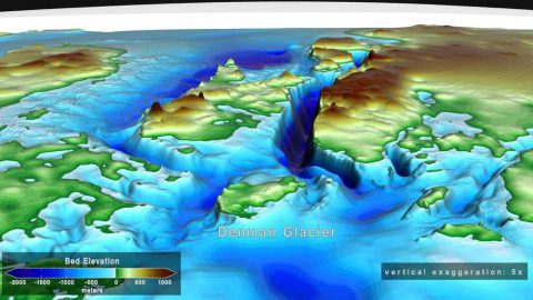 This illustration shows a vertically exaggerated image of the ground under Denman Glacier in East Antarctica, including a deep trough (blue area in the center) beneath its eastern flank. (NASA's Scientific Visualization Studio)