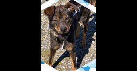 Stewart County Faithful Friends Animal Rescue - Bumpus