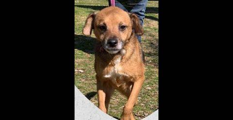 Stewart County Faithful Friends Animal Rescue - Tucker
