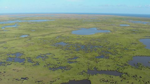 The Mississippi River Delta contains vast areas of marshes, swamps and barrier islands - important for wildlife and as protective buffers against storms and hurricanes. Rapid land subsidence due to sediment compaction and dewatering increases the rate of submergence in this system. (K.L. McKee / U.S. Geological Survey)