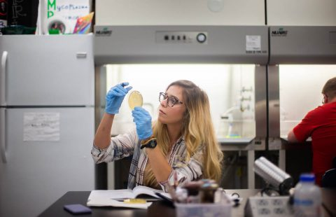 Austin Peay State University biology student Gabrielle Rueff examines a phage sample. (APSU)