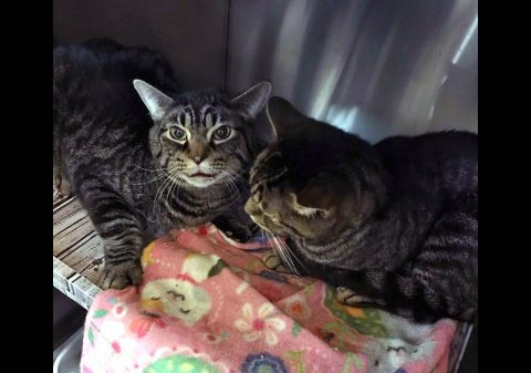 Cats Are Us - Gilly and Havoc