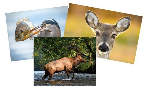 TWRA Photo Contest for Annual Wildlife Calendar.