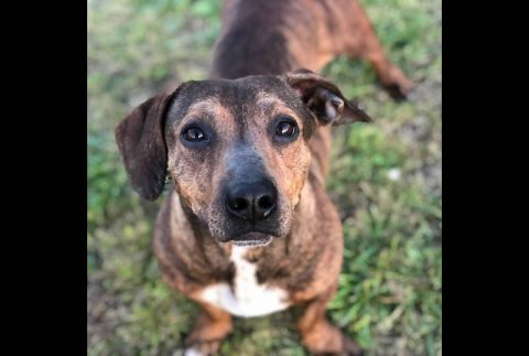 Scooby is available at Two Ladies Caring Dog Rescue