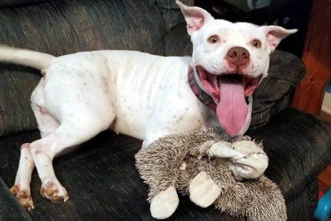 Companion Pet Rescue of Middle Tennessee -Bella