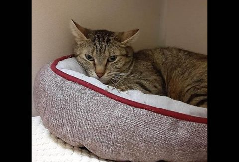 Montgomery County Animal Care and Control - Mila