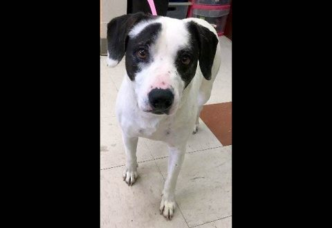 Montgomery County Animal Care and Control - Oakley