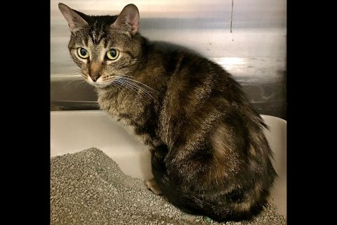 James is available at Cats Are Us.