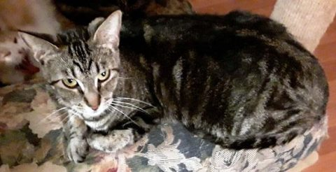 Humane Society of Clarksville-Montgomery County - Nellie