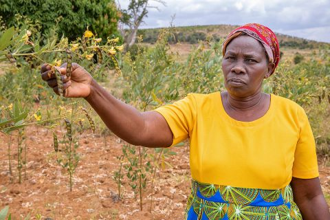 Patricia Nthenge, a farmer in Kenya who is participating in Mercy Corps' AgriFin program, stands among her pigeon pea crop. In collaboration with NASA, AgriFin is incorporating precision satellite weather data into the information and resources it delivers to smallholder farmers in Africa. (Mercy Corps)