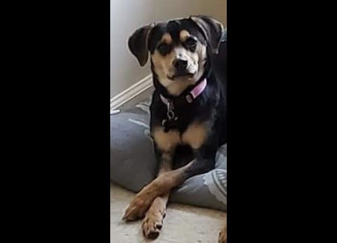 Two Ladies Caring Dog Rescue - Jade