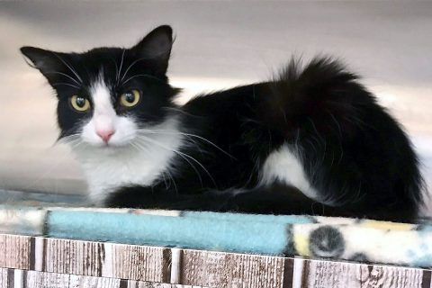Lacie is available at Cats Are Us.