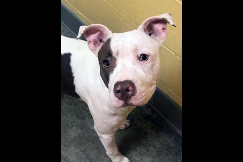 Montgomery County Animal Care and Control - Lucky