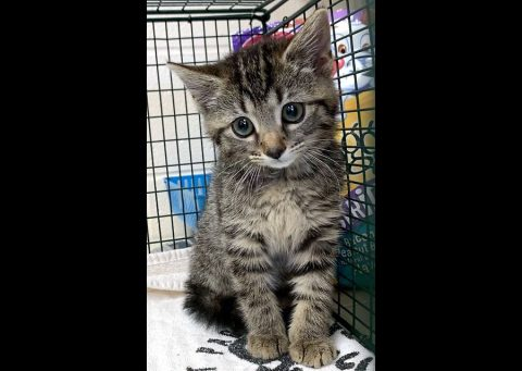 Montgomery County Animal Care and Control - Mabel