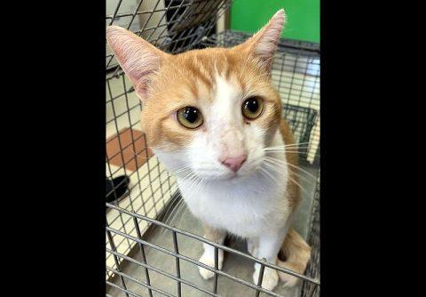 Montgomery County Animal Care and Control - Sammon
