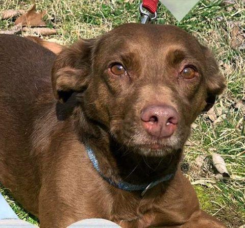 Stewart County Faithful Friends Animal Rescue - Mocha