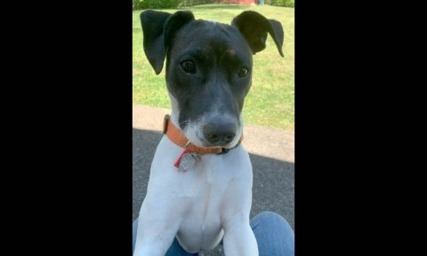 Companion Pet Rescue of Middle Tennessee - Milly