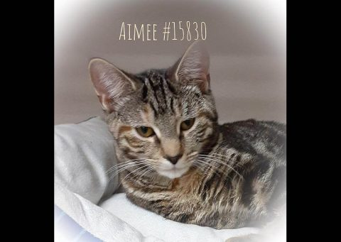 Montgomery County Animal Care and Control - Aimee