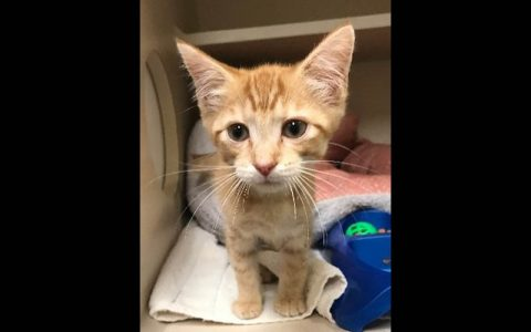 Montgomery County Animal Care and Control - Parsley