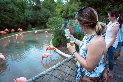 September Sips at the Nashville Zoo will provide social distancing fun. (Nathan Zucker)