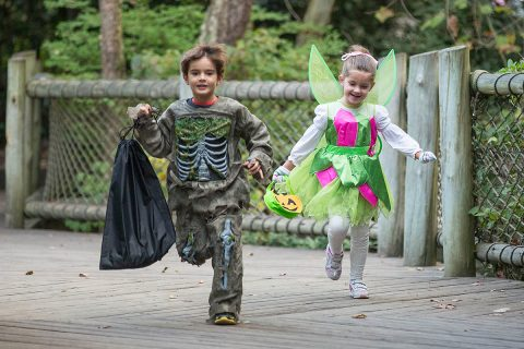 Boo at the Zoo returns this year to the Nashville Zoo. (Amiee Stubbs)