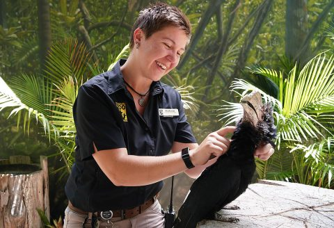 Nashville Zoo keeper with Silvery-Cheeked Hornbill. (Kelsey Spies and Jane)