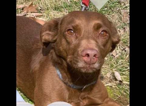 Mocha can be found at Stewart County Faithful Friends Animal Rescue.