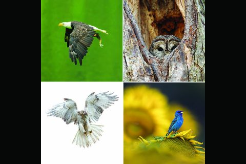 Voting Open for The Best Tennessee Wildlife and Landscape Photo