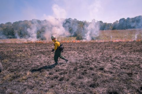 A controlled fire burned 15 acres of restored prairie. (APSU)