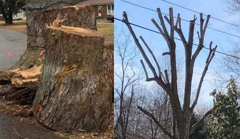 Cleanup Don'ts: During the annual Fall Cleanup, the Clarksville Street Department will not pick up tree stumps, tree limbs from topped trees, or limbs trimmed by a commercial company.