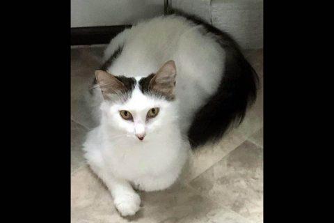 Dover Humane Society - Princess