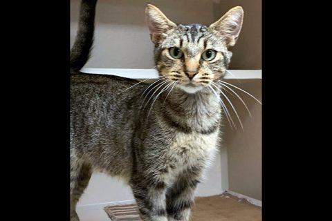 Montgomery County Animal Care and Control - Kiki
