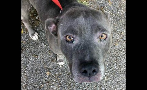 Montgomery County Animal Care and Control - Lawrence