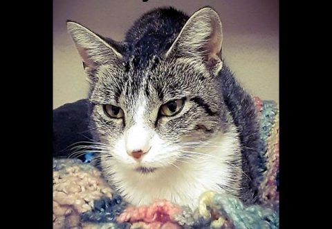Montgomery County Animal Care and Control - Ruby