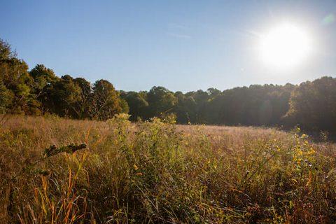 Austin Peay State University's Southeastern Grasslands Initiative. (APSU)