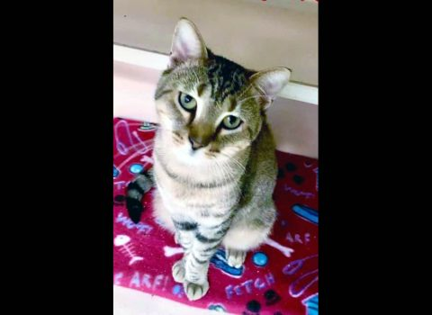 Montgomery County Animal Care and Control - Rue
