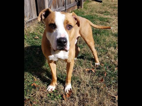 Companion Pet Rescue of Middle Tennessee - Sarge