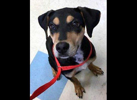 Montgomery County Animal Care and Control - Kora