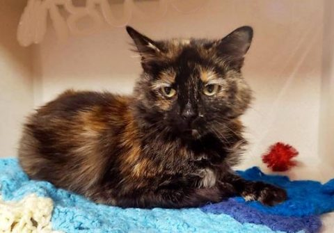 Montgomery County Animal Care and Control - Maybelline