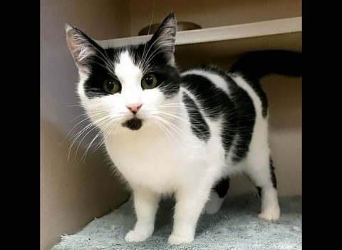 Oreo is available at Montgomery County Animal Care and Control.