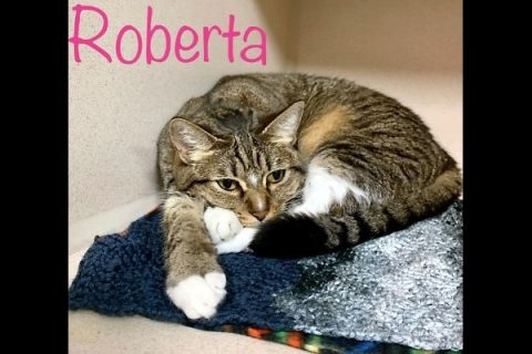 Montgomery County Animal Care and Control - Roberta