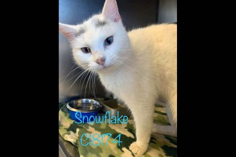 Montgomery County Animal Care and Control - Snowflake
