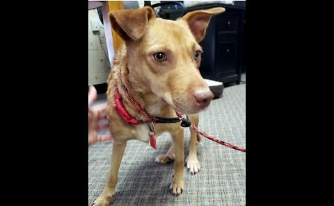Companion Pet Rescue of Middle Tennessee - Sissy