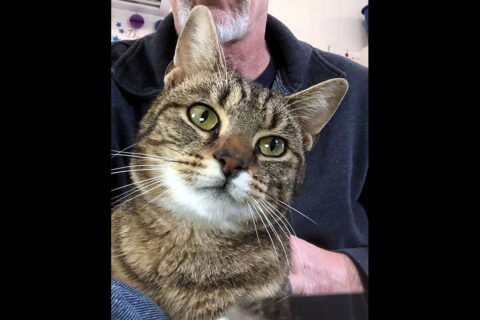 Dover Humane Society - Paulie
