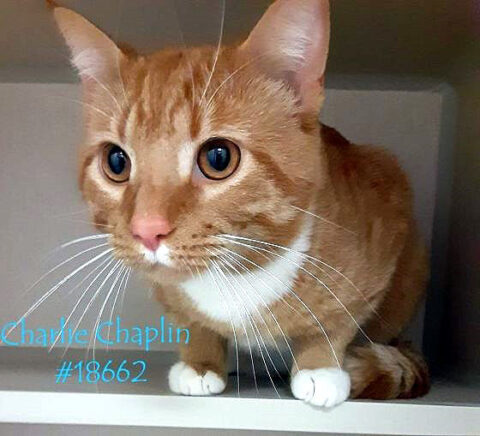 Montgomery County Animal Care and Control - Charlie Chaplin