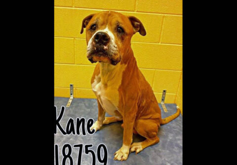 Montgomery County Animal Care and Control - Kane